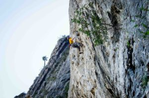 Frank on Freedom Fries 5.12c.